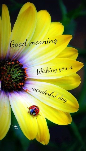 Good Morning 1575471741 Freepik Online Free Quotes Free Messages Download Free Images